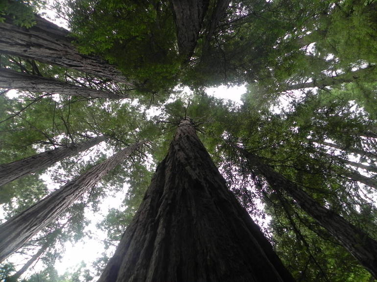 demi-journee-a-muir-woods-et-sausalito-giant-redwoods