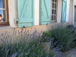 I just loved the lavender and trees surrounding the winery. , irishgal76 - July 2014