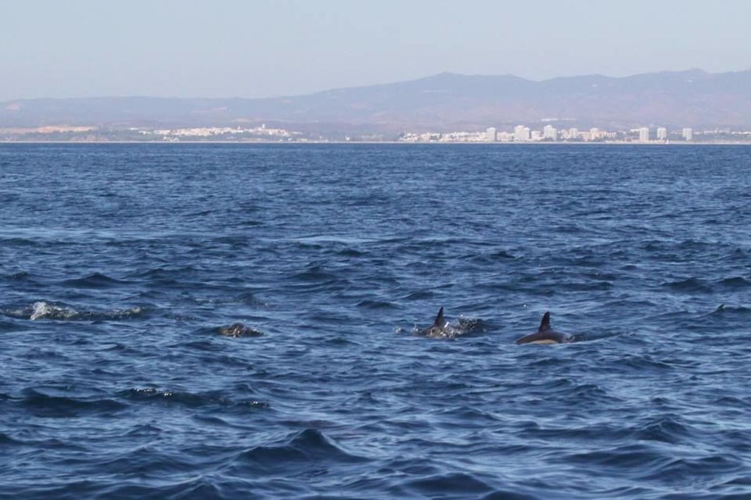 MÁS FOTOS, Crucero de avistamiento de delfines de medio día por el Algarve desde Albufeira con almuerzo barbacoa en la playa