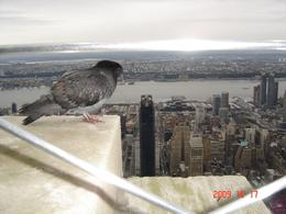 86th floor - breath taking sight! Pigeon is not as excited as we were - for him it is just another day at home! - October 2009