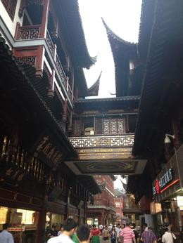 Old Town Shanghai, Cat - August 2012