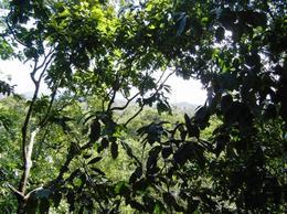 Rainforest in Jamaica - March 2012