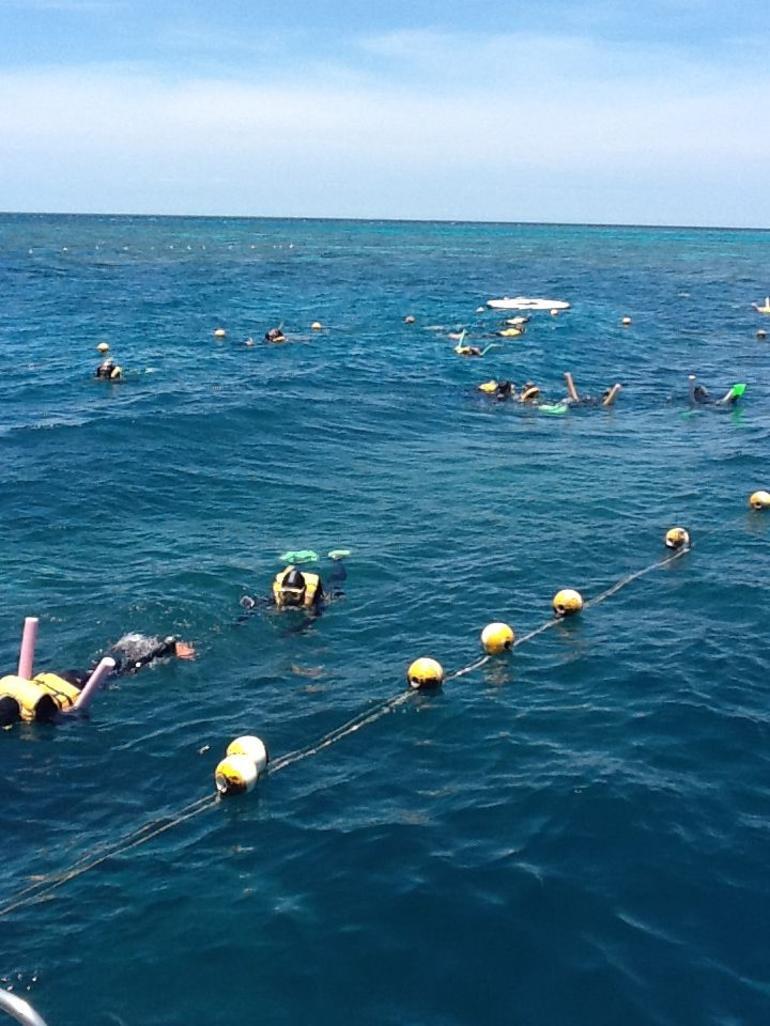 Snorkel - Port Douglas