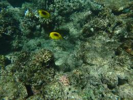 gelbe Fische , Reiner P - May 2017