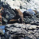 Seal Colony Tour from Wellington, Wellington, NUEVA ZELANDIA