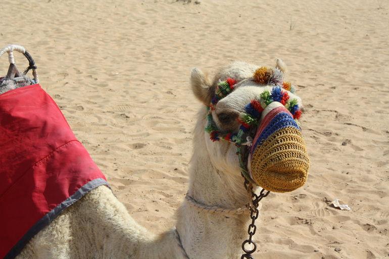Morning Dubai Desert safari with Camel ride,Sand boarding & Breakfast