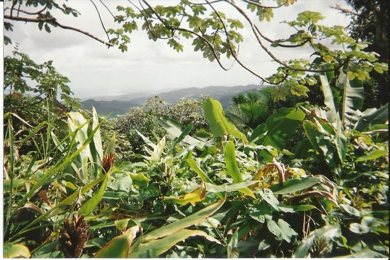 El Yunque Rain Forest - San Juan