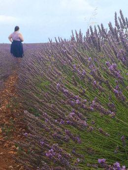 Enjoying the lavender field! , cloud31286 - July 2016