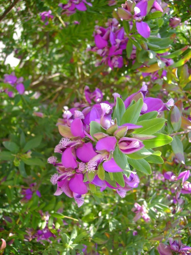 Flowers in Monaco - Nice