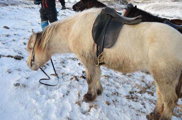 Viking Horse Riding and Golden Circle Tour from Reykjavik photo 23