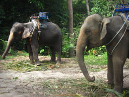 You can't visit Thailand without coming across some elephants - February 2014