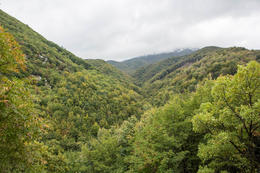 This is where Truffle hunting experience happens , vofo - October 2014