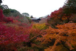 Autumn at Tofukuji Temple , Mrs. Ty - December 2011