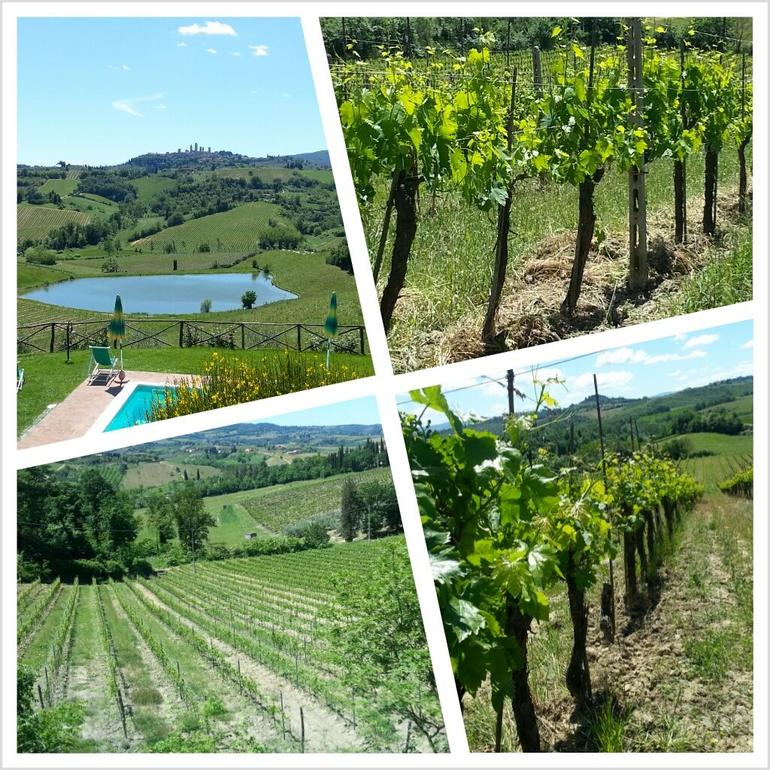 Tuscan Vineyards - Florence