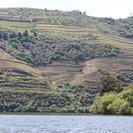 Tour Completo del Vino del Valle del Duero con Almuerzo, Degustaciones y Crucero por el Río, Oporto, PORTUGAL