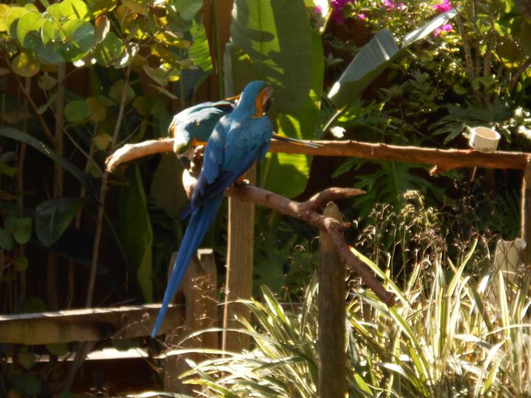 BLUE BIRDS - Orlando