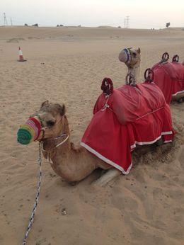 Camel ride , sanger_g18 - January 2016