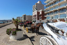 Horse-drawn carriages available for a ride down the boardwalk!, Bandit - October 2013