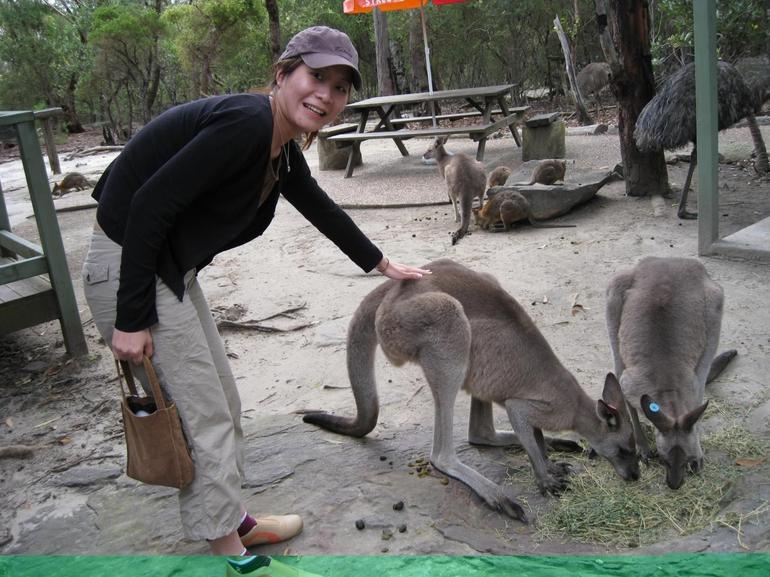 Me & the Kangaroos - Sydney