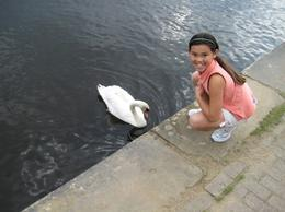 Feeding the swans in the lake., clairemc - October 2010
