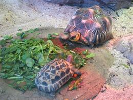 Feeding time for the tortoises! - November 2009