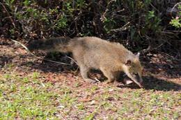 Kudamundi – most common animal seen in the park , Patricia W - April 2012