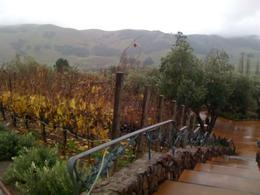 Even under the rain, we loved the amazing scenery and lovely wineries!, Patricia P - January 2011
