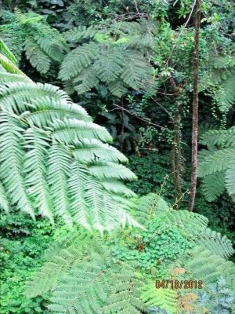 Flora - St Lucia