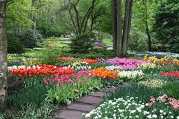 Keukenhof Gardens and Tulip Fields - May 2013 , Milan K - June 2013