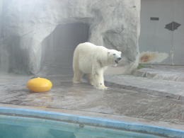 The polar bear there was really cute!, Bandit - June 2012