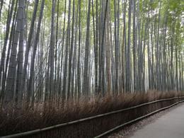 Bamboo grove, Krishnan Vaitheeswaran - April 2010