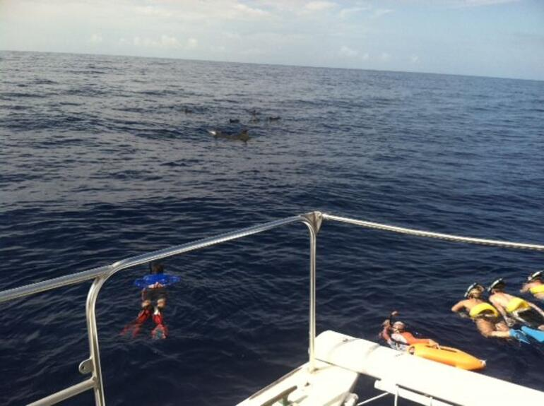 Snorkeling with Pilot Whales - Oahu