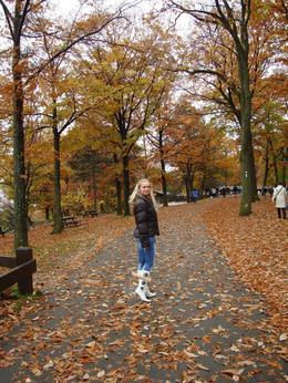 walking - November 2009
