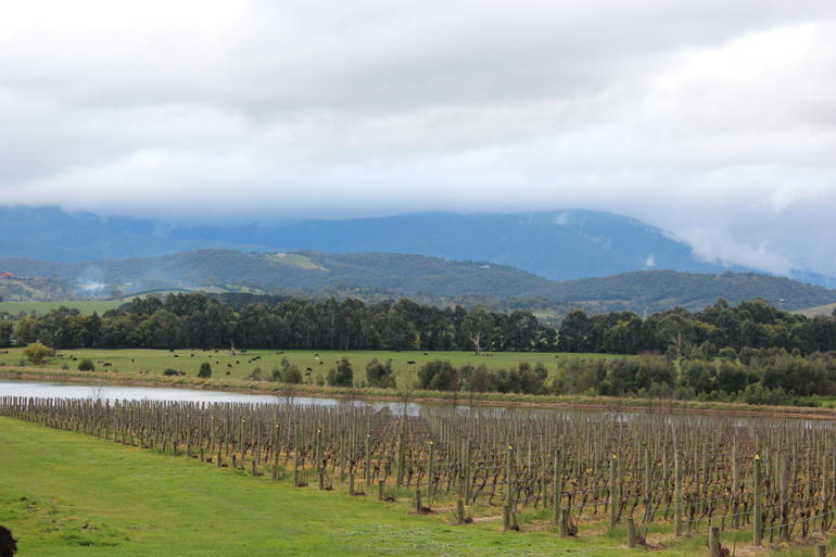 Yarra Valley Wine and Winery Tour from Melbourne -
