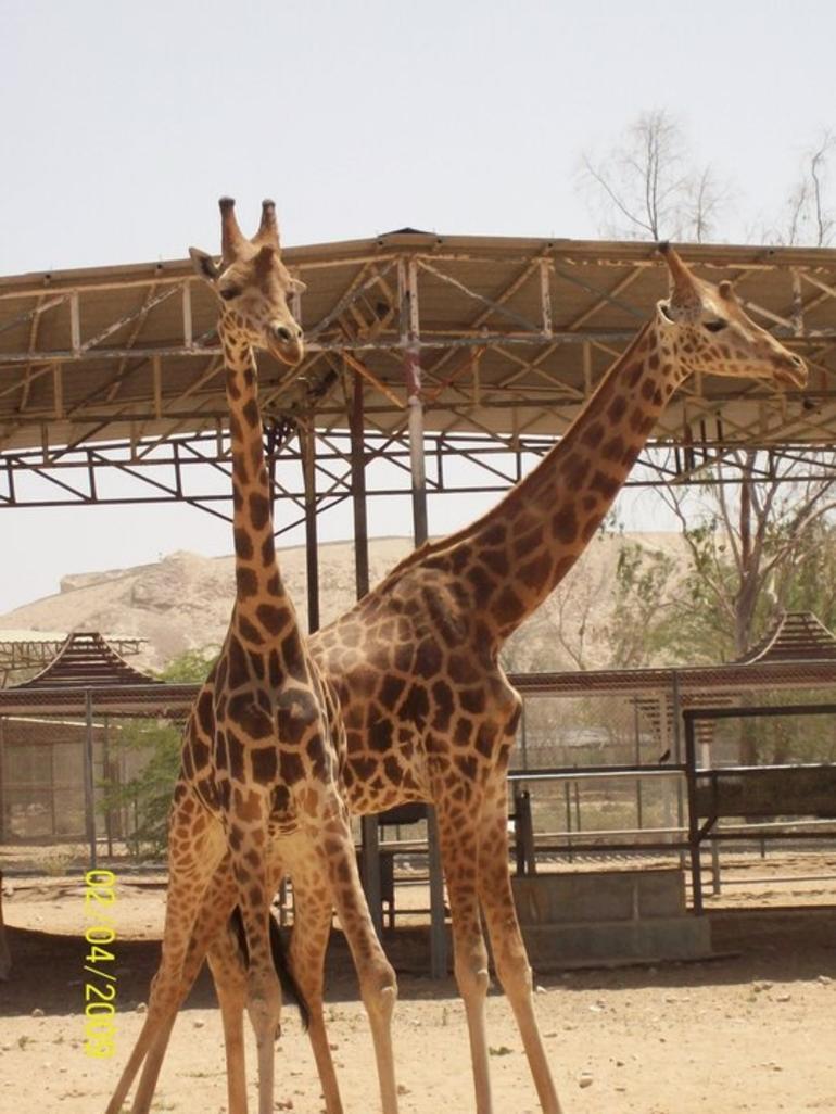 Animal pictures - United Arab Emirates