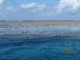 Spot de plongée et de snorkeling , isabelle b - July 2013