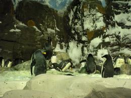 Cute penguins - October 2009