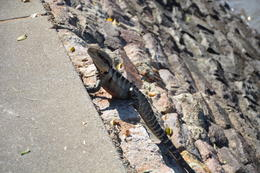 Look who popped up to see us whilst walking along the river bank! , Simon F - August 2014