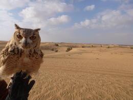 Beautiful owl part of the flight display. , Edward W - December 2014