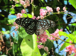 Beautiful butterfly , DEBJANI C - February 2016