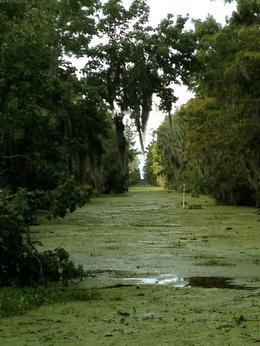 Swamp Bayou , Mary Rita S - October 2013