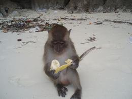 Monkey beach. Phi Phi Island, Thailand., ARCHELAOS S - September 2008
