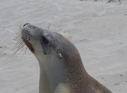 Getting up close to the seals , Gary H - April 2017