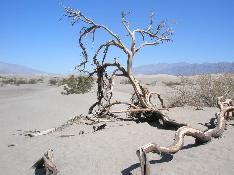 Former life in Death Valley!