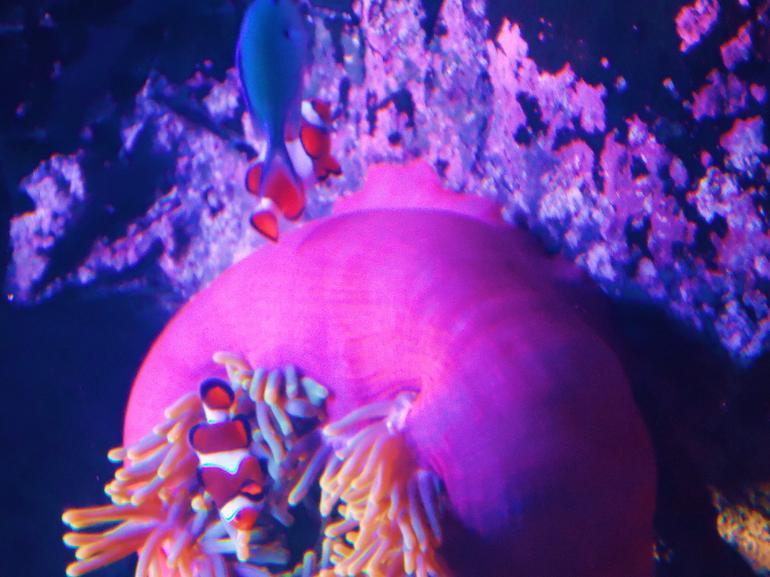 I Found Nemo - Sydney