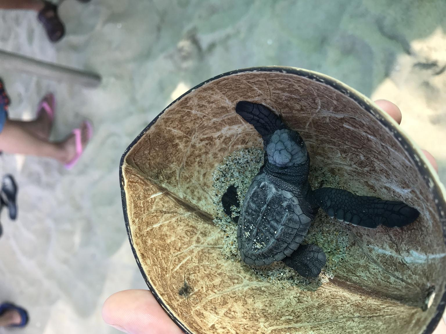 MAIS FOTOS, Sea Turtle Release in Puerto Escondido