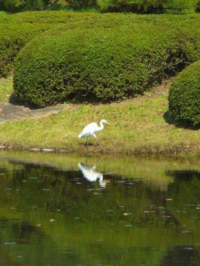 Imperial Palace Gardens - Tokyo
