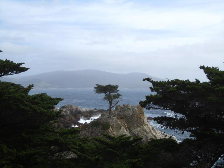 The Lone Tree - San Francisco