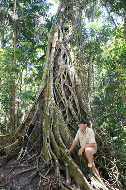 Our tour guide Barry telling us about the trees in the rainforest. , Andrew B - October 2015