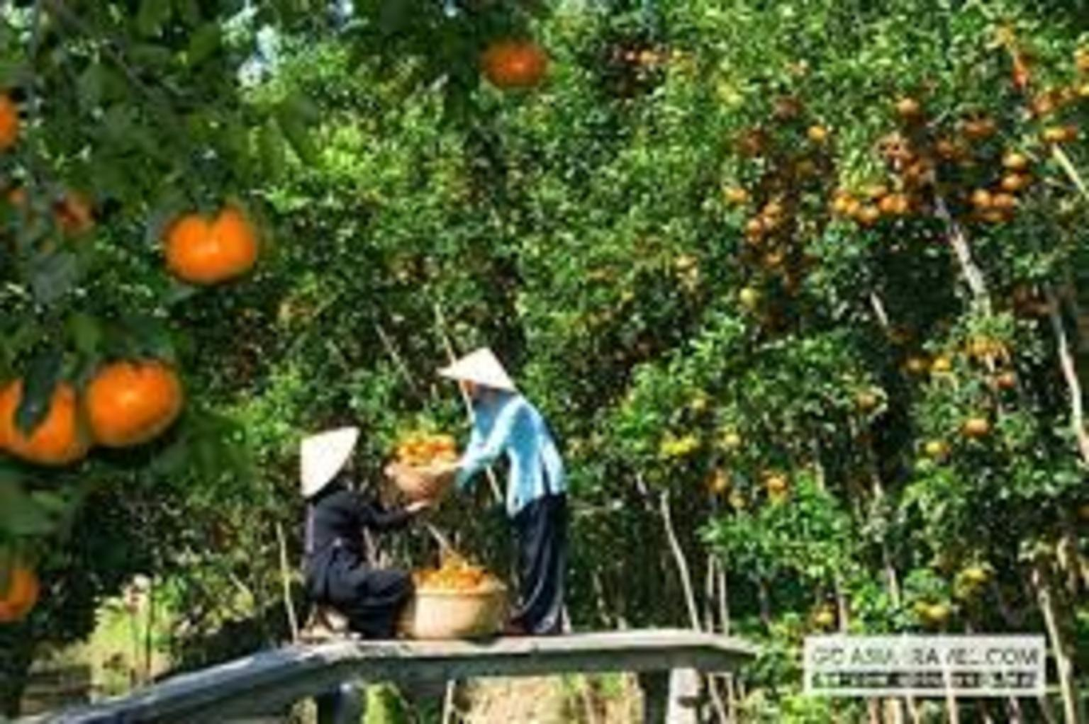 MAIS FOTOS, PRIVATE LUXURY Mekong Delta full day from HCM city